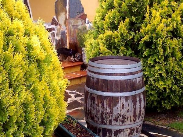 Hotel para perros en Valladolid, Guardería canina en Valladolid, Residencia para perros