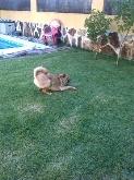 Adiestramiento canino valladolid,  adiestramiento perros valladolid