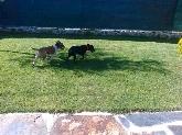 Hotel para perros en Valladolid,  Guardería canina en Valladolid