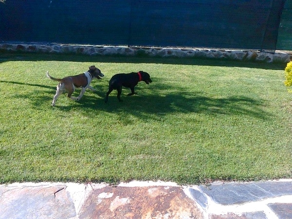 Hotel para perros en Valladolid, Adiestramiento canino valladolid, adiestramiento perros valladolid
