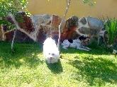 Residencia para perros, Hotel para perros en Valladolid