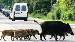 Animales «fuera de lugar»
