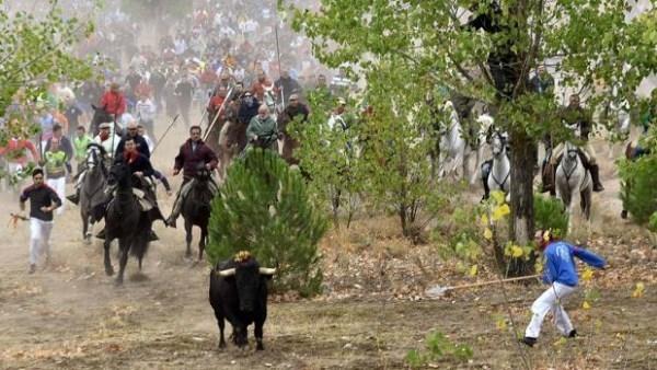 Tordesillas, dispuesta a celebrar su primer Toro de la Peña