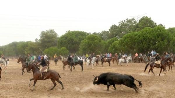 La Junta aconseja a Tordesillas recuperar el nombre del «Toro de la Vega» para el torneo