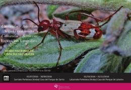 Exposiciones de las mejores ilustraciones científicas y de especies singulares de cantáridas