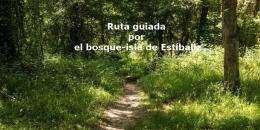 Ruta guiada por el bosque-isla de Estíbaliz