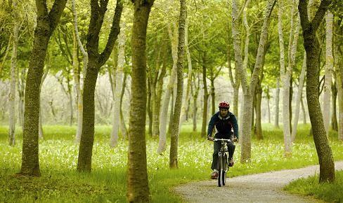 En bici por el bosque de Armentia