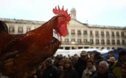 El tradicional Mercado Agrícola de Navidad celebrará este año la primera edición de 'Plástico Cero'