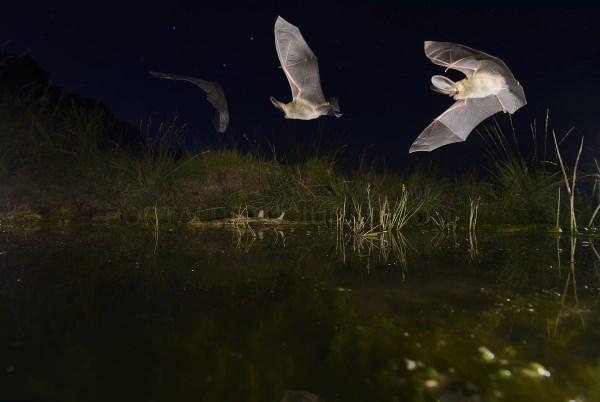 Abierta la exposición  'Murciélagos, aliados de la noche'