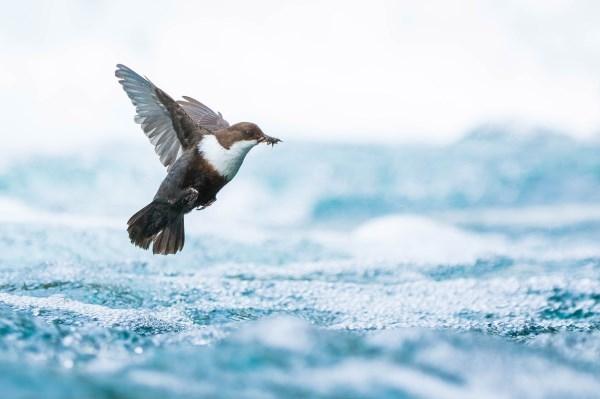 """Hoy se inaugura la exposición de las fotografías premiadas del """"European Wildlife Photographer of the Year"""""""