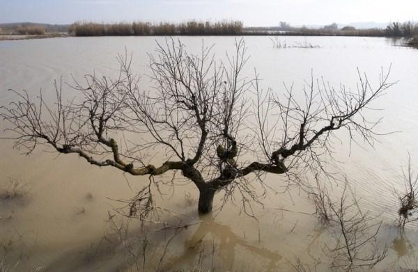 ClimAlert desarrollará una plataforma para la alerta temprana de sequías, incendios e inundaciones