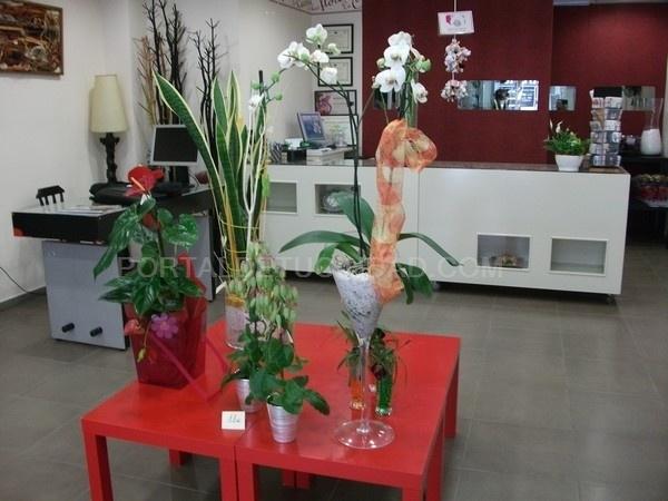 plantas en Aldaia, decoración floral el Aldaia