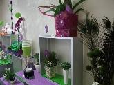 plantas en aldaia, decoracion en aldaia