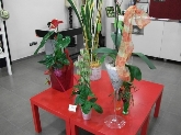 flores para bodas en aldaia