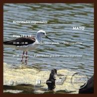 Día Internacional de las Aves Migratorias en el Clot de Galvany