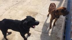 Medio Ambiente rescata dos perros por un posible caso de abandono
