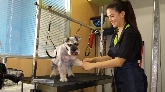 clínica veterinaria en sevilla, urgencias veterinarias en sevilla