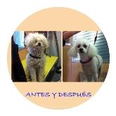 vacunas para perros en Sevilla, desparasitación de animales en Sevilla este