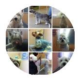 hospital para mascotas en Sevilla, tienda de animales en Sevilla
