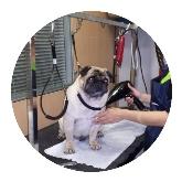 clinica para animales en sevilla, cirugía para animales en sevilla
