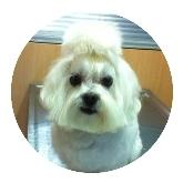 urgencias veterinarias en sevilla este, radiología para mascotas en sevilla