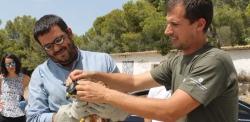 Este año los agentes de medio ambiente han localizado dieciséis nuevos nidos de milano