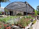 jardineria cornella baix llobregat, flores plantas cornella baix llobregat barcelona,