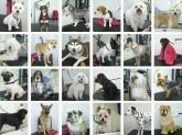 perros y mascotas cornella baix llobregat,  boxer cornella baix llobregat