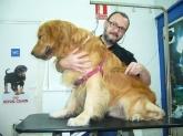 , peluquerias canina cornella baix llobregat