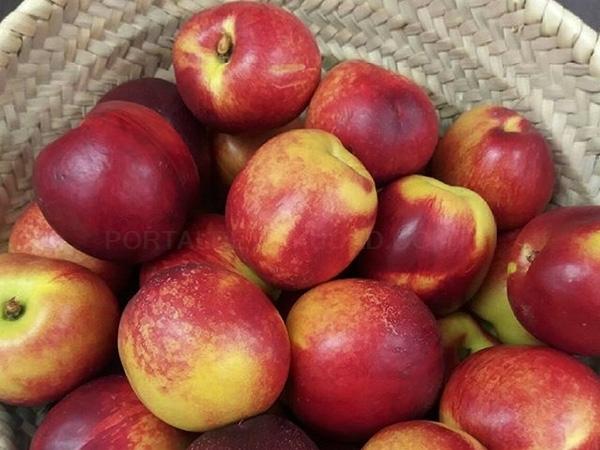 fruta de temporada,