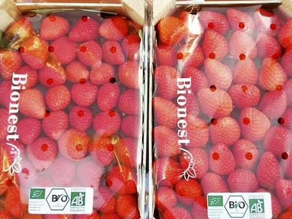 fresas maduixes ecologicas en Cornellá,