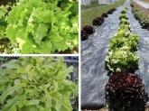 cistelles de fruita i verdura ecologica cornella baix llobregat,  cestas ecologicas barcelona