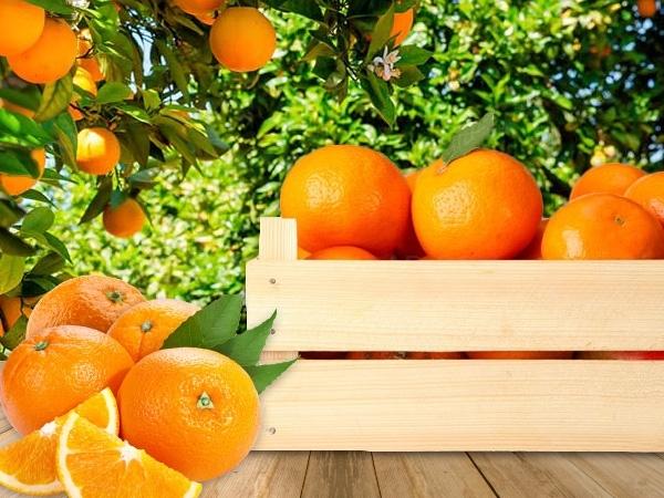 fruita y verdura de proximitat baix llobregat,
