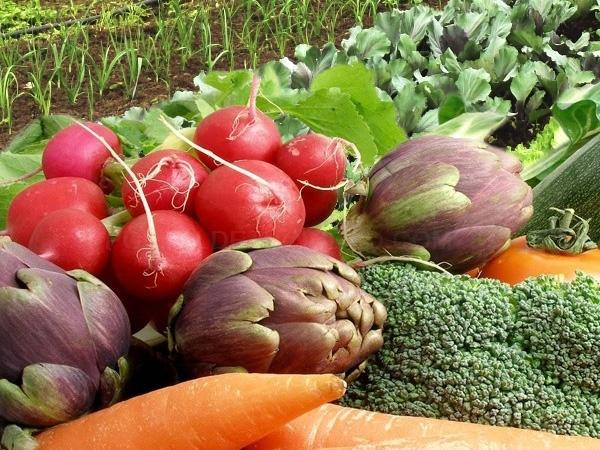 fruta verdura bio de cultivos naturales,