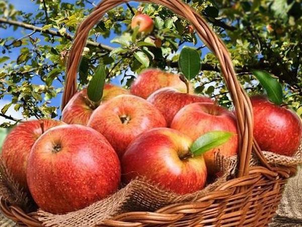 fruitera i verduleria a Cornellá Baix Llobregat,