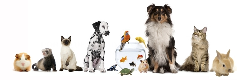 Centro veterinario Sant Feliu de Llobregat, Veterinario Molins de Rei,