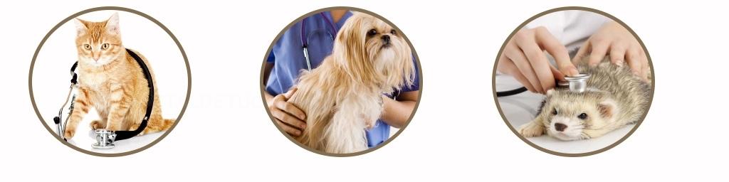 Clínica veterinaria El Prat de Llobregat, Centro veterinario económico Sant Just Desvern,