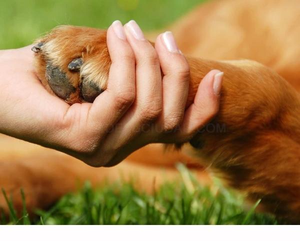 castració gos econòmica Baix Llobregat,