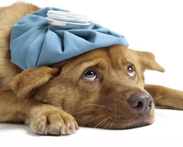 Serveis veterinaris Baix Llobregat, hospital veterinario,
