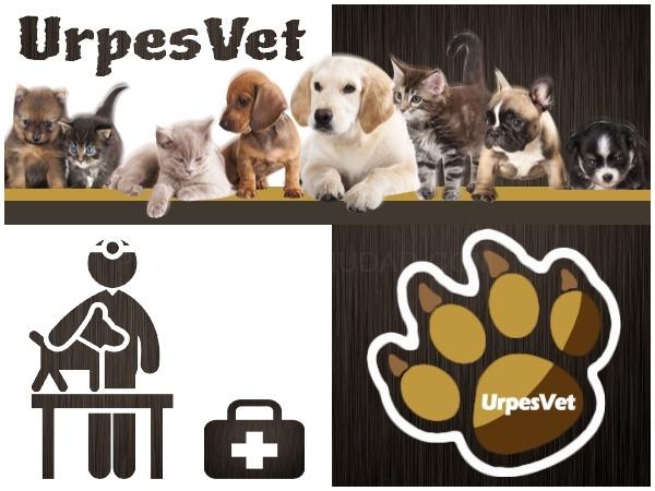 Microchip perro barato económico Barcelona, veterinario especies exóticas baix llobregat,