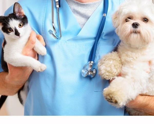 centro veterinario analíticas laboratorio análisis Sant Joan Despí,