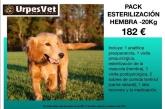 campaña castración perro esterilización perra baix llobregat,