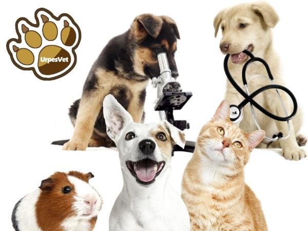 veterinarios solidarios Cornella L'Hospitalet Sant Joan Despí,