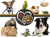 serveis veterinaris baix llobregat, centre veterinari Cornellà,