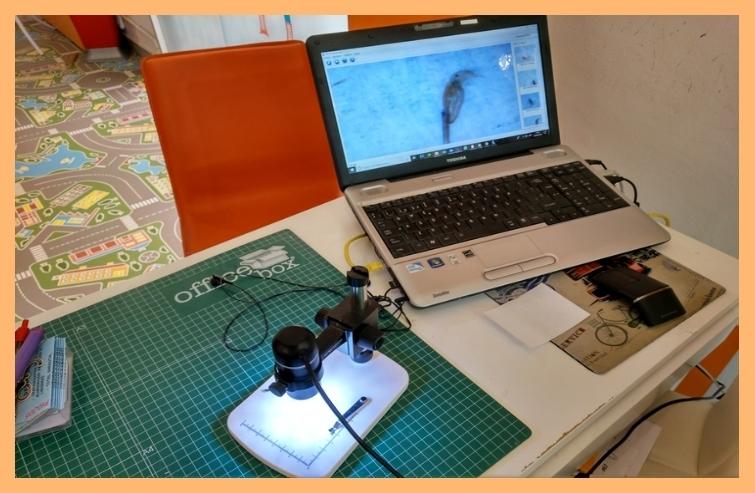 Eliminación de piojos y liendres en Cornellá de Llobregat