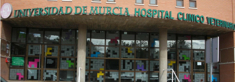 Cirugía Veterinaria Murcia, especialidades animales en Murcia, Dermatología veterinaria en Murcia,
