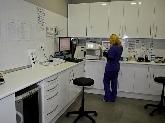 servicio openvet murcia, servicios veterinarios abiertos 24 horas murcia
