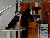 ovenvet murcia 365 días, tienda mascotas murcia, tiendas de mascotas en murcia