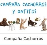 veterinario urgencia Murcia, veterinario 24 horas Molina Segura,