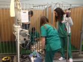 Ecografía caballos en Murcia, Solución cojeras equinos en murcia, hospitalización potros en Murcia,